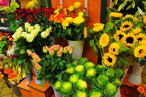Blumen Börse Skonitis GmbH - Einzelhandel | Filialen
